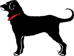 black-dog1